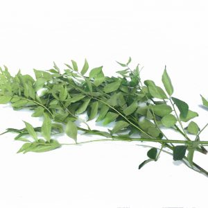 DAUN KARI - CURRY LEAVE 咖哩叶 500G / KG
